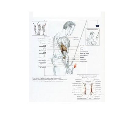 Poleas de ejercicio